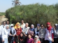 Visita a una piantagione di Cyperus papyrus L. in Egitto