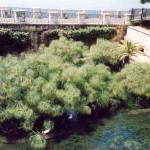 I papiri della Fonte Aretusa, luglio 2005
