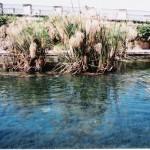 I papiri della Fonte Aretusa, luglio 2004
